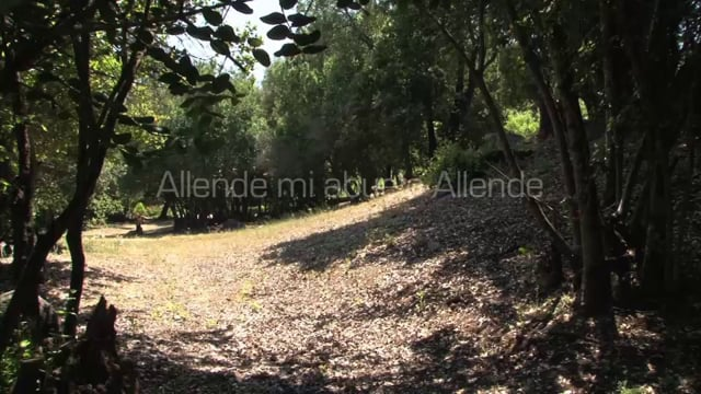 """""""Allende, mi abuelo Allende"""" de Marcia Tambutti Allende"""