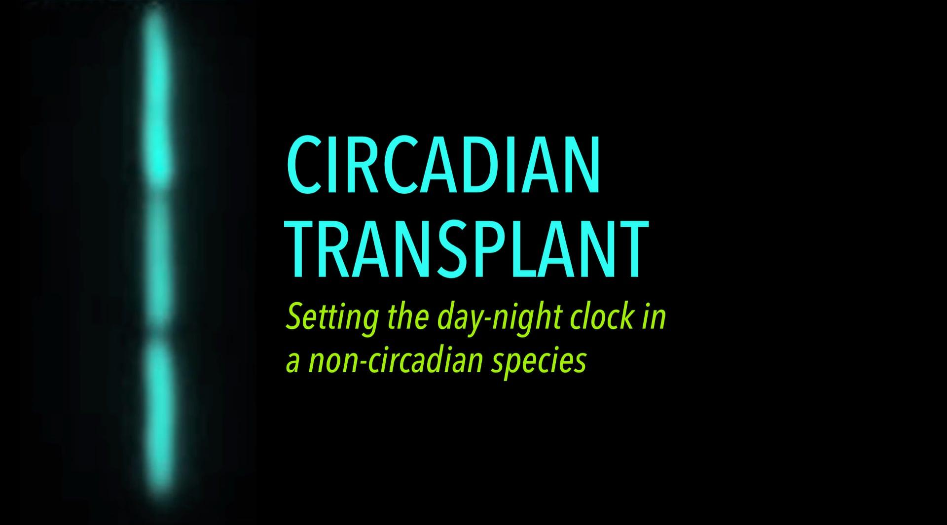 Circadian Transplant