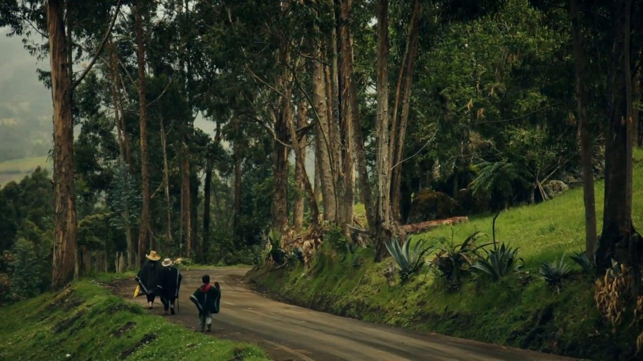 Puro Coffee Peru Rainforest Reserve