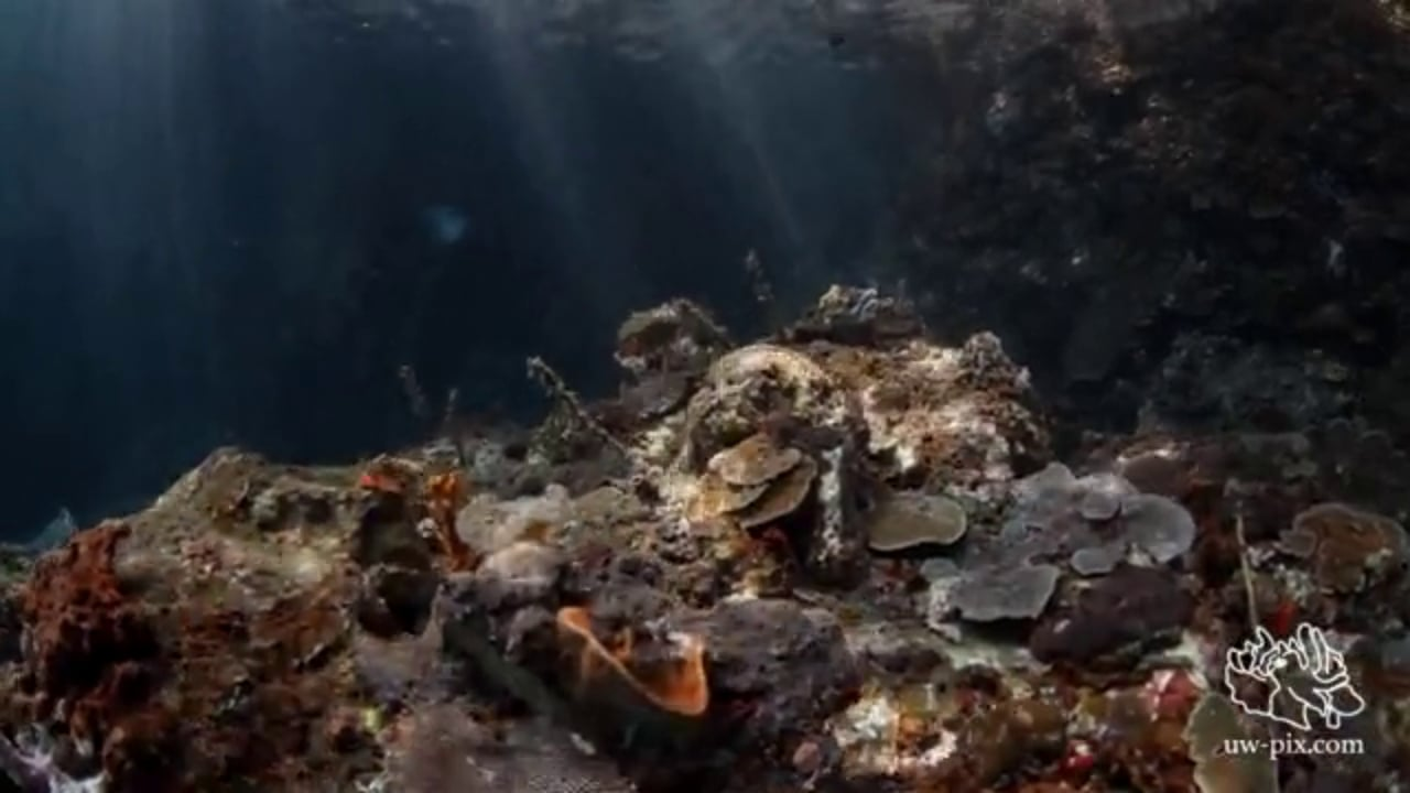 Critters of the Lembeh Strait   Episode 10 - 2015   Wide Angle Wonder Part 1