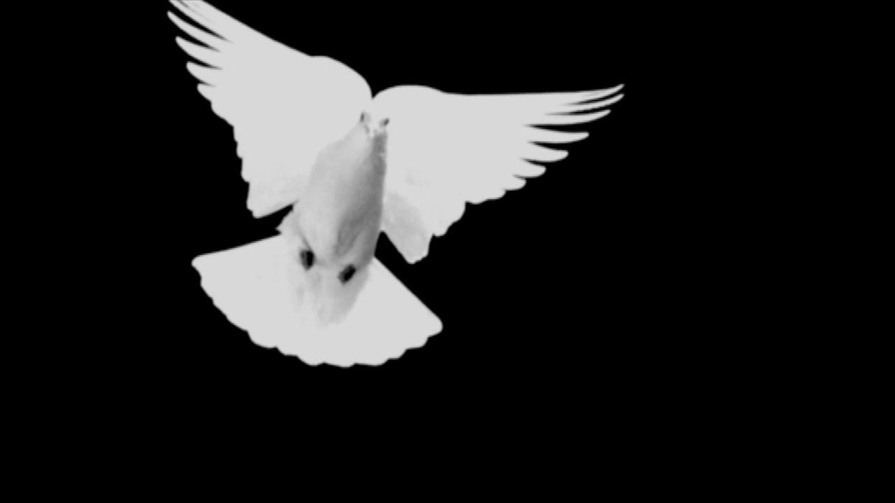 70th Anniversary of Bombing of Hiroshima & Nagasaki Image Spot