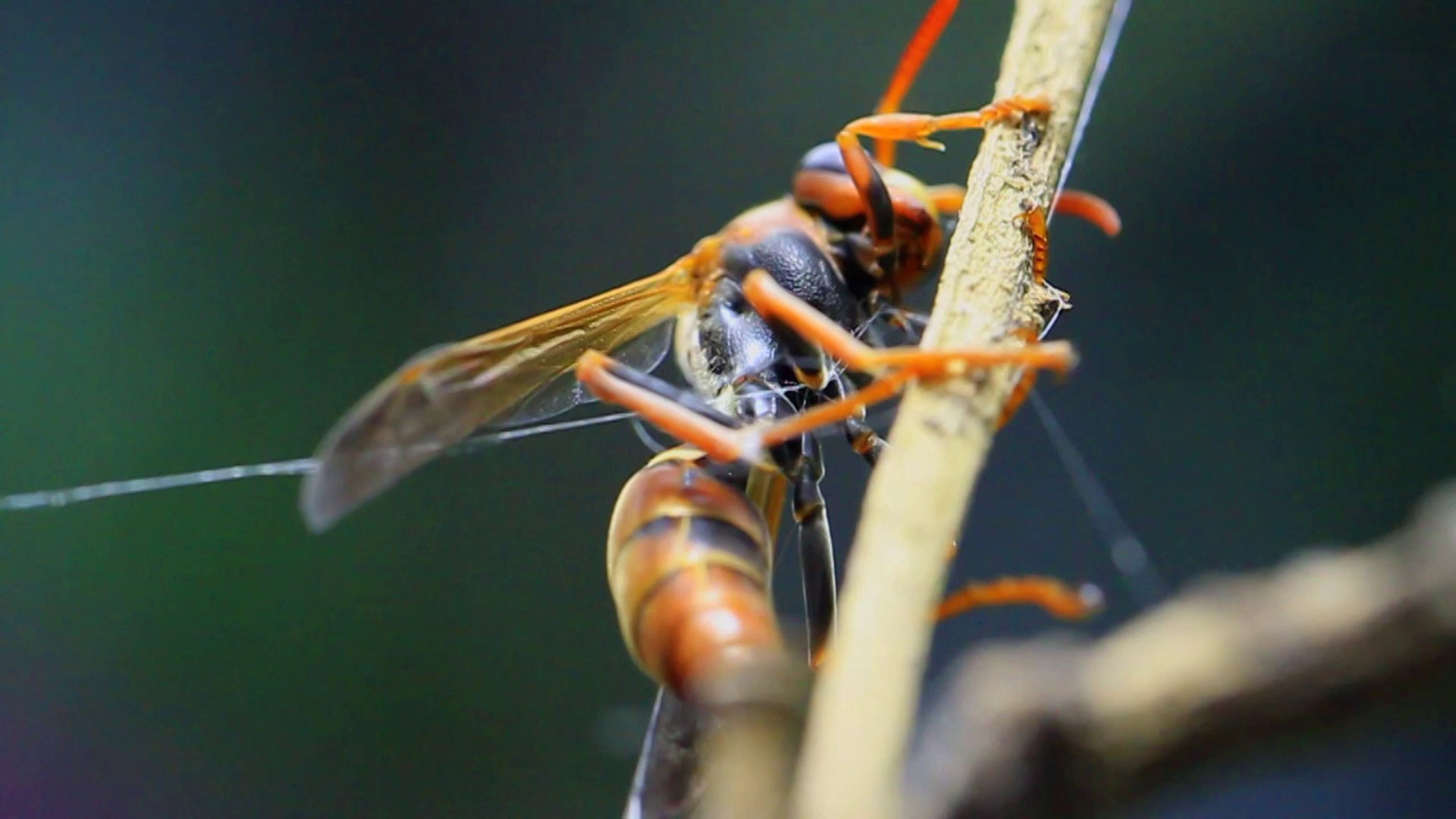 A Bug's Life - 100mm MM w/ Canon 7D