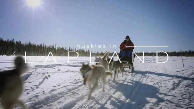 Travel film Lapland - Husky Safari