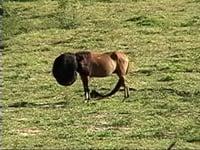 Solange Pessoa, <em>Cavalos,</em> 2003, video, 0'48