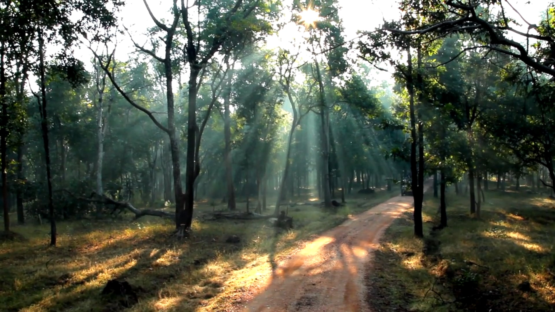 Jungle Home | Pench