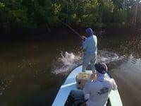 Everglades Fly Fishing Tarpon and Snook Miami