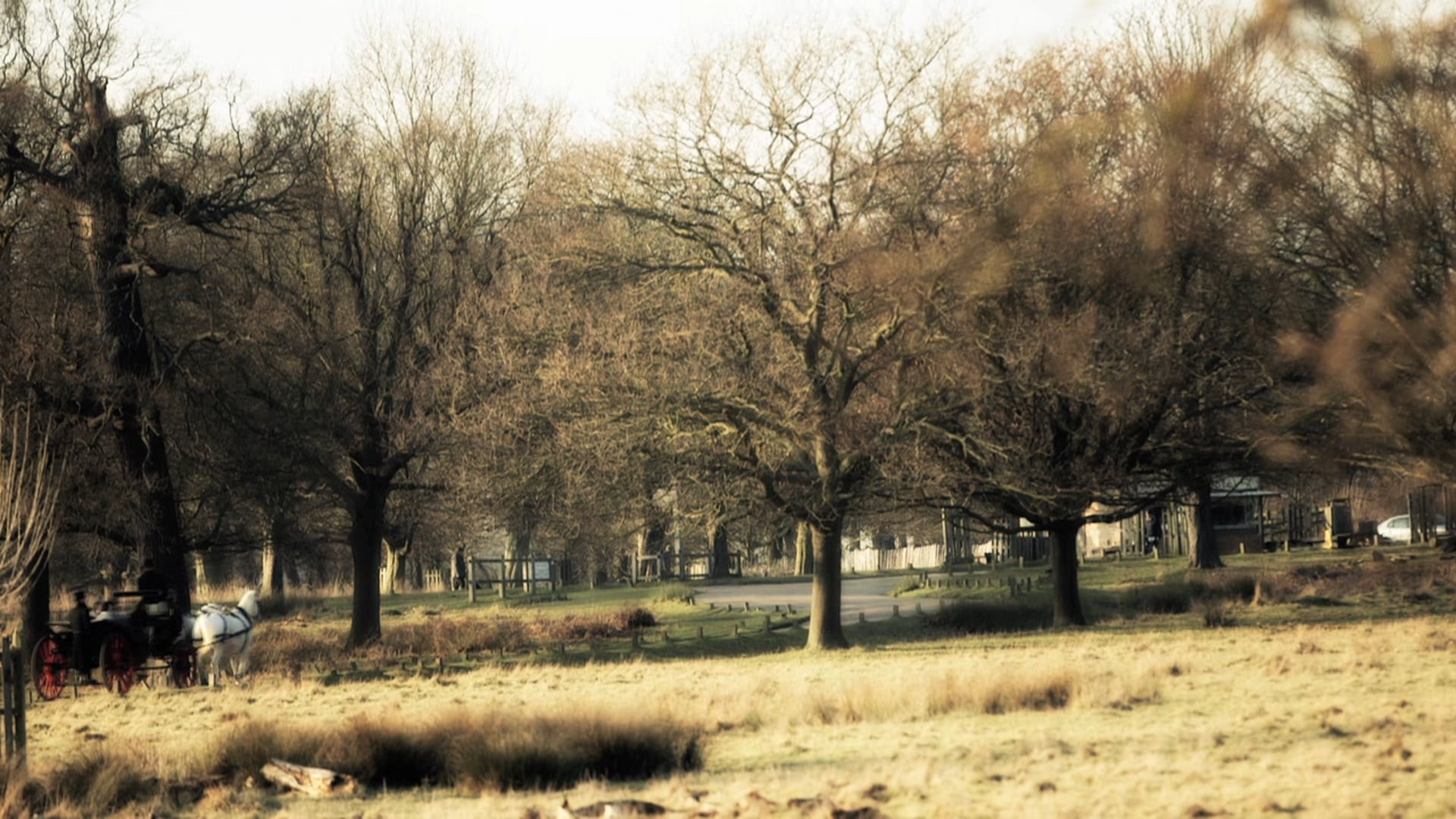 Winter Carriage Rides Richmond Park