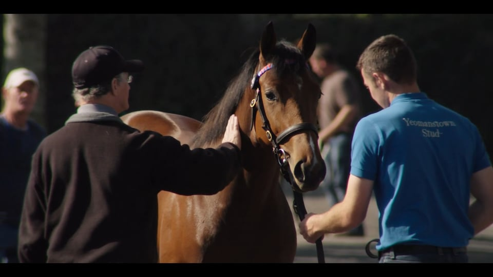 2015 Goffs Orby Sale Highlights