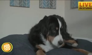 TailTalk Translates Dogs' Wags