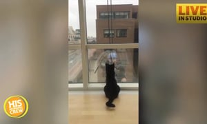 Cat Loves Window Cleaning Day