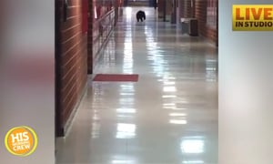 Bear Roams Halls at Montana High School