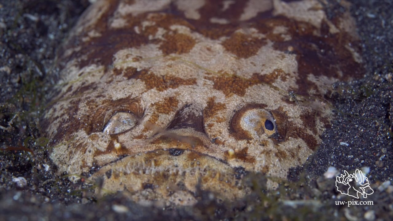 Critters of the Lembeh Strait   Episode 19 - 2015   The Good, The Bad and The Ugly - Part 1