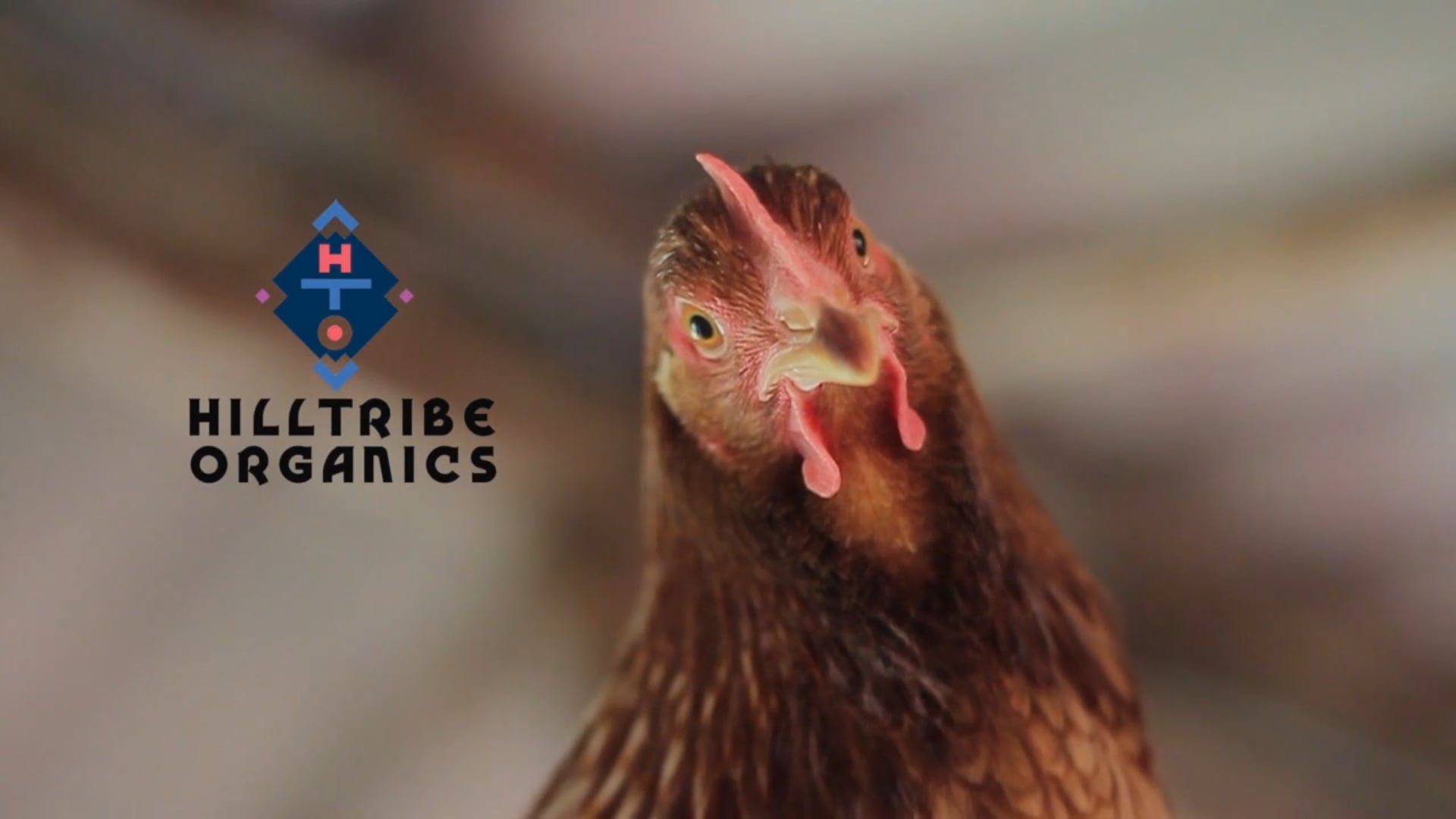 Hilltribe Organics : Corporate Film