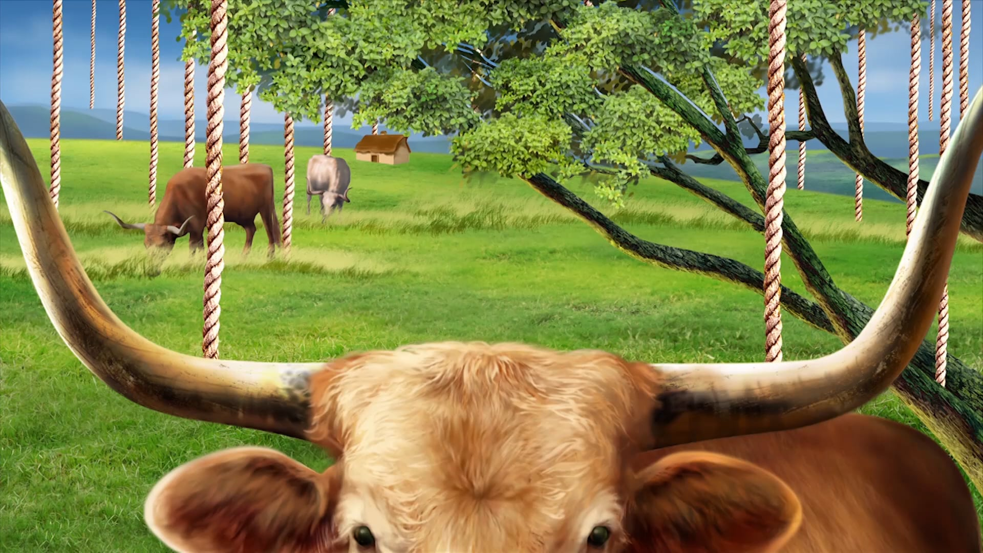 Cows - Animation