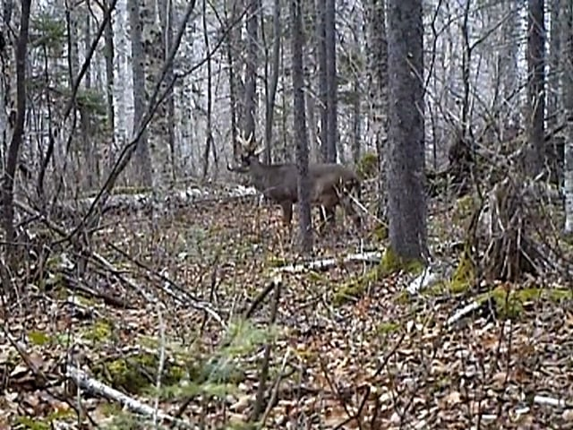 Pat Salerno - Tips on Setting Up Trail Cams and Hunting for Whitetail Deer Sheds