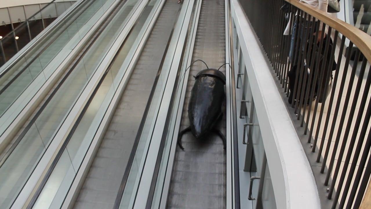 Giant cockroach on escalator