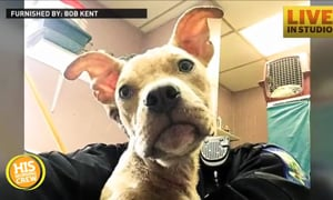Officer Rescues and Adopts Pup