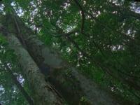 Daniel Steegmann Mangrané,<em>Spiral Forest</em>, 2013/2015,16mm film,11'41