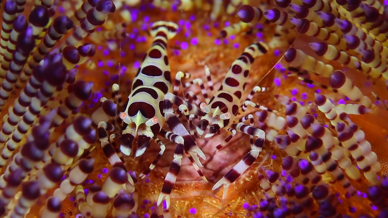 Critters of the Lembeh Strait