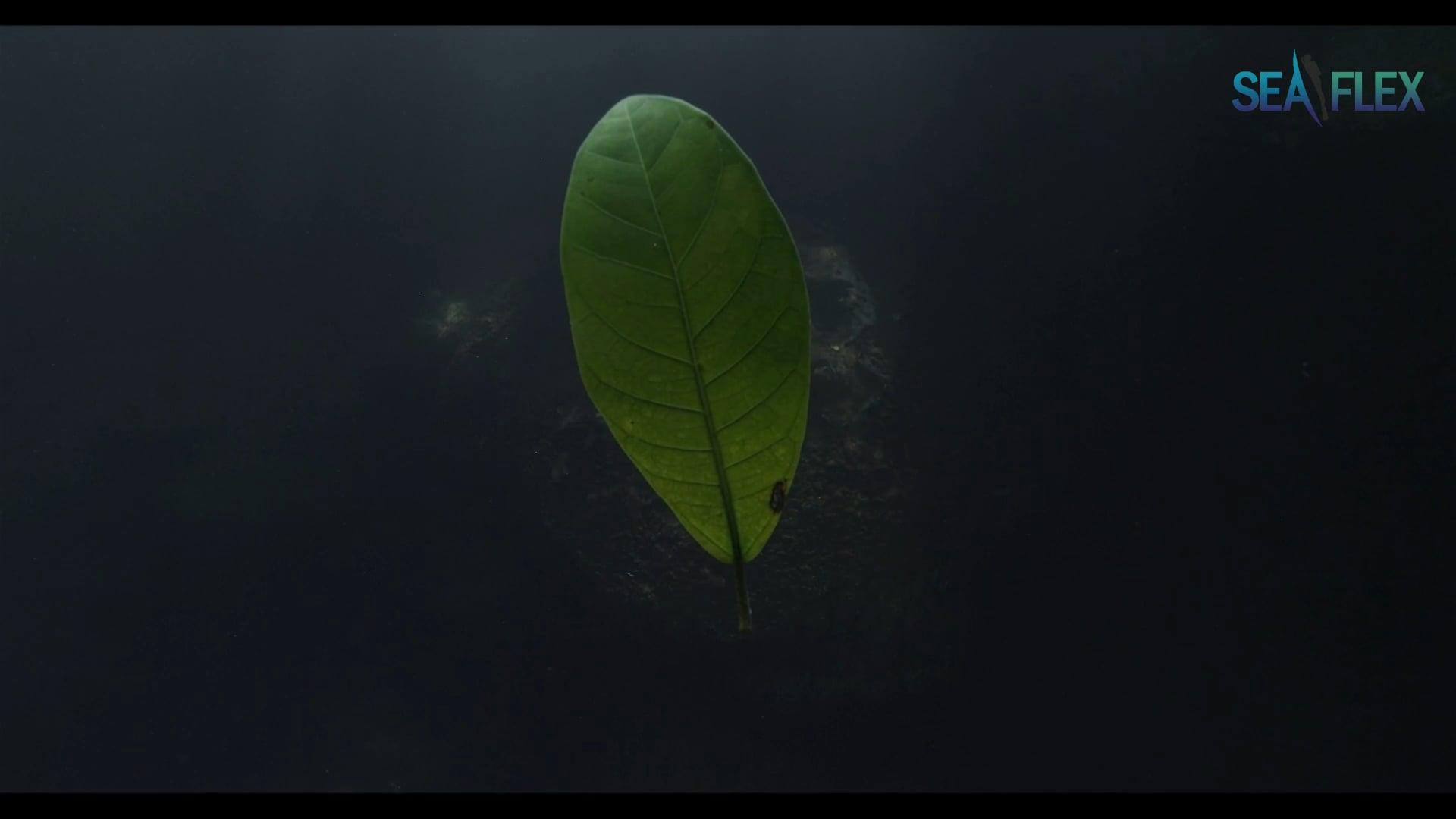 UHD 4K Underwater Movie 'Angelita'
