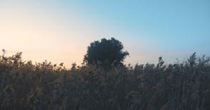 sunset winds