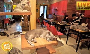 Catfe Temporarily Closes for Amazing Reason