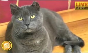 Hemi the Cat Finally Reunited with Family