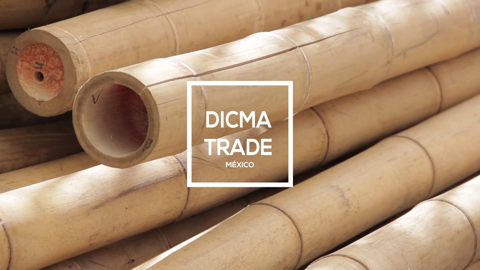 Dicma Trade   Workshop Jörg Stamm