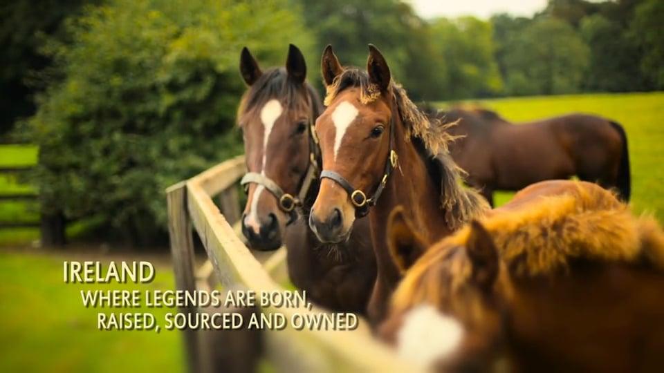 Irish Thoroughbred Marketing Promotional Video