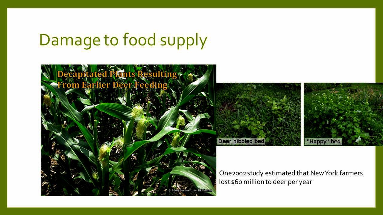 Session 3: Free Market Environmentalism by Edward Stringham, Trinity College