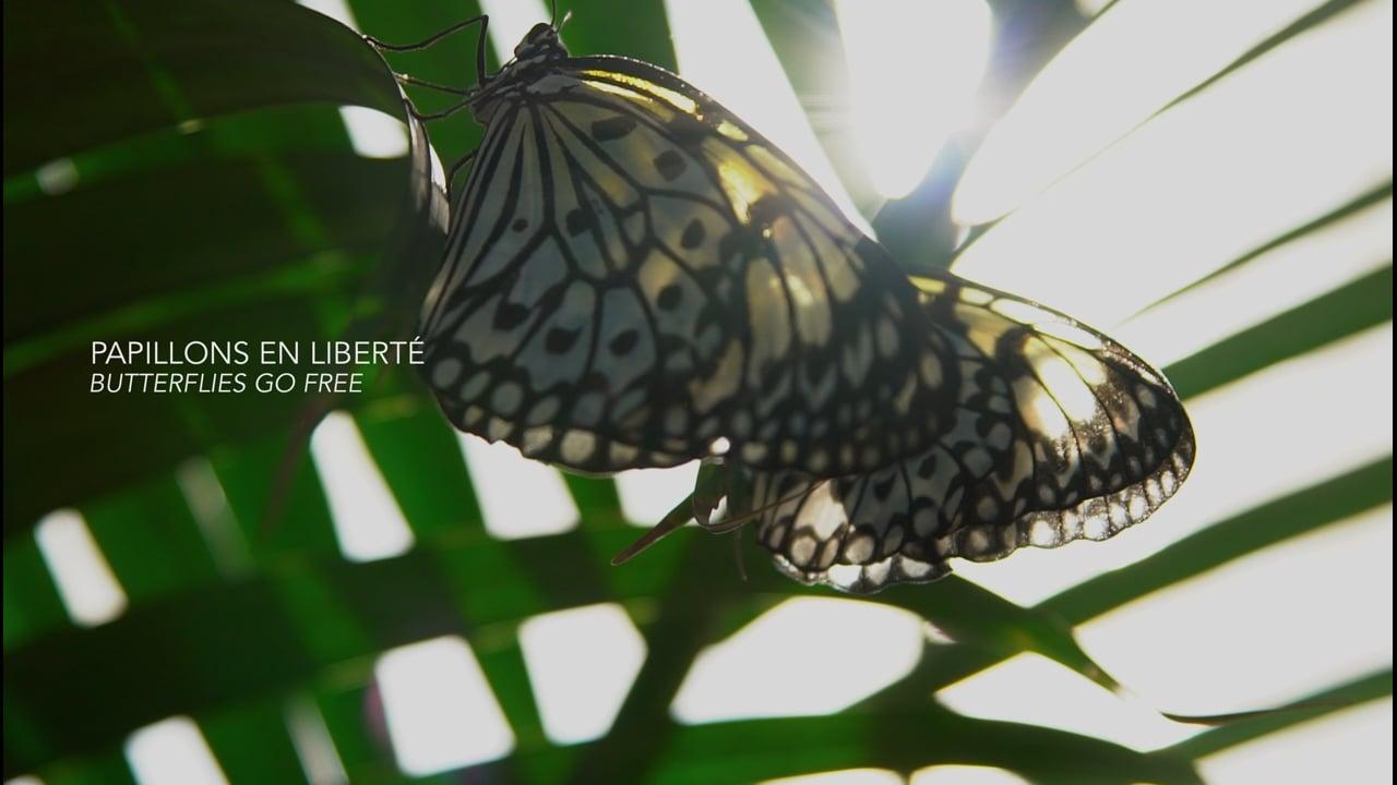 Papillons en liberté - Butterflies Go Free