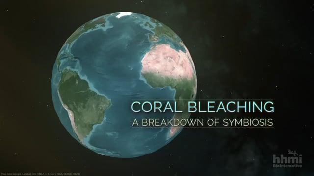 Coral Bleaching: A Breakdown of Symbiosis