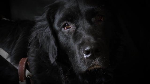 Reportage : Refus de location d'un logement en raison d'un chien MIRA (Zone 28 mars 2016 p.02)