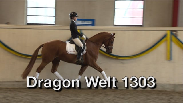 Dragon Welt 1337