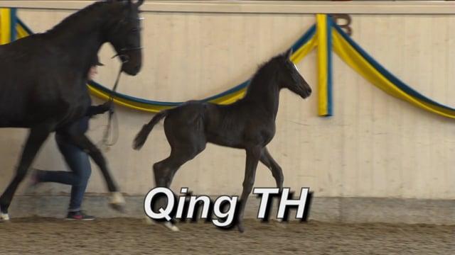 Qing TH