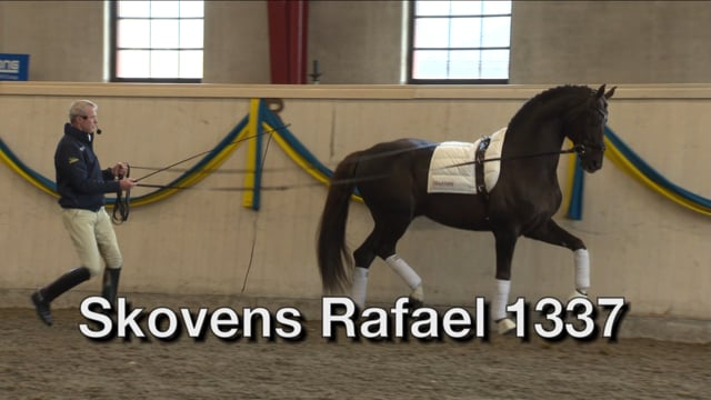 Skovens Rafael 1337 -