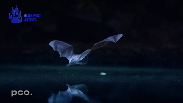 Hunting bats in slow motion