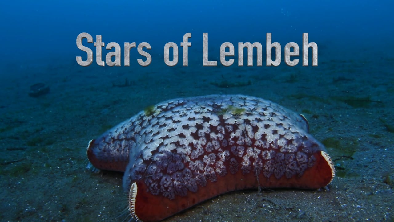 Critters of the Lembeh Strait   Episode 23 - 2015   Stars of Lembeh