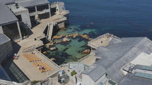 Monterey Bay Aquarium  25 year