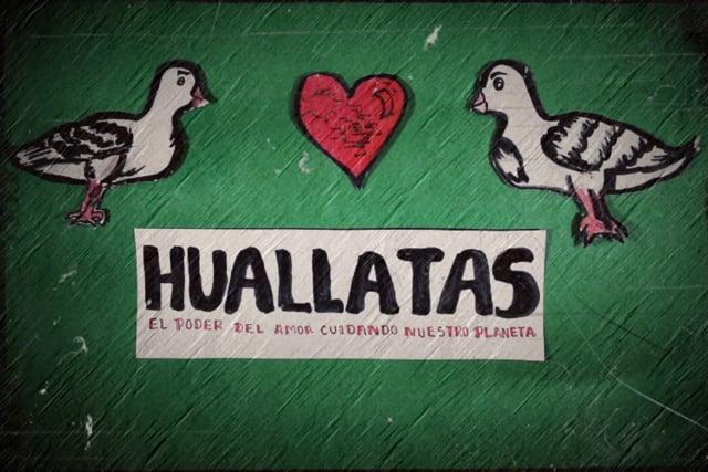 Huallatas: el poder del amor cuidando nuestro planeta