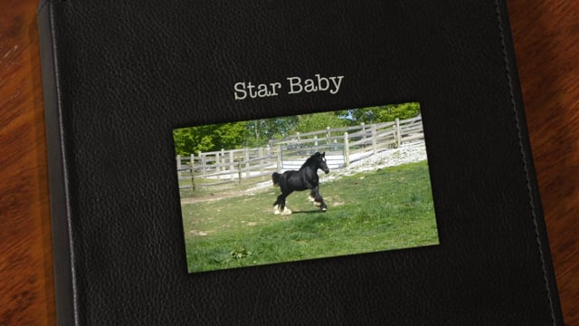 Star Baby 2015 Filly