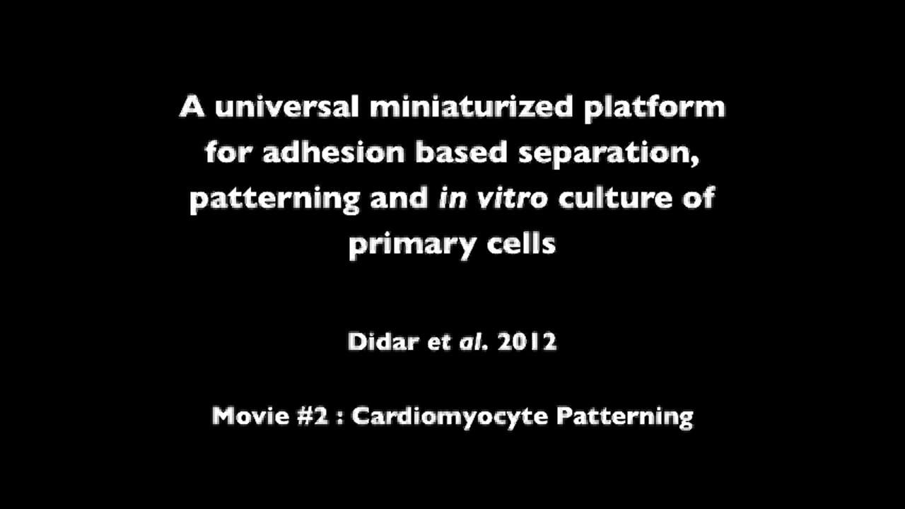 Single Cell SIRPA Movie 2 AVI