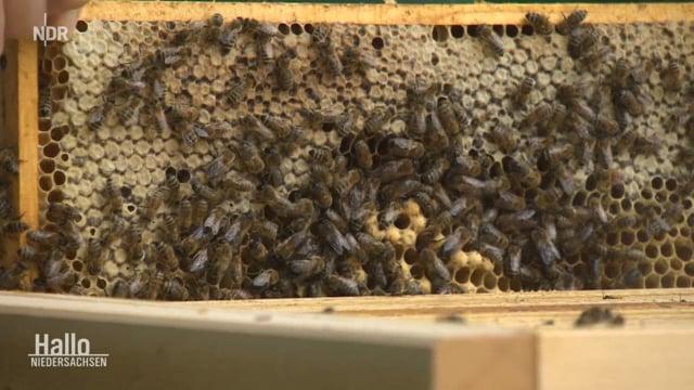 Bienen - Zukunft in der Stadt