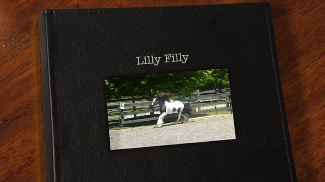 SWF Lyla's Blue Lilly 2014 Filly for Sale