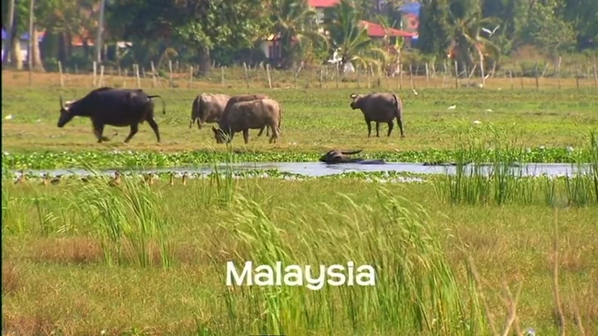 Ten Deadliest Snakes - Malaysia (with Nigel Marven)