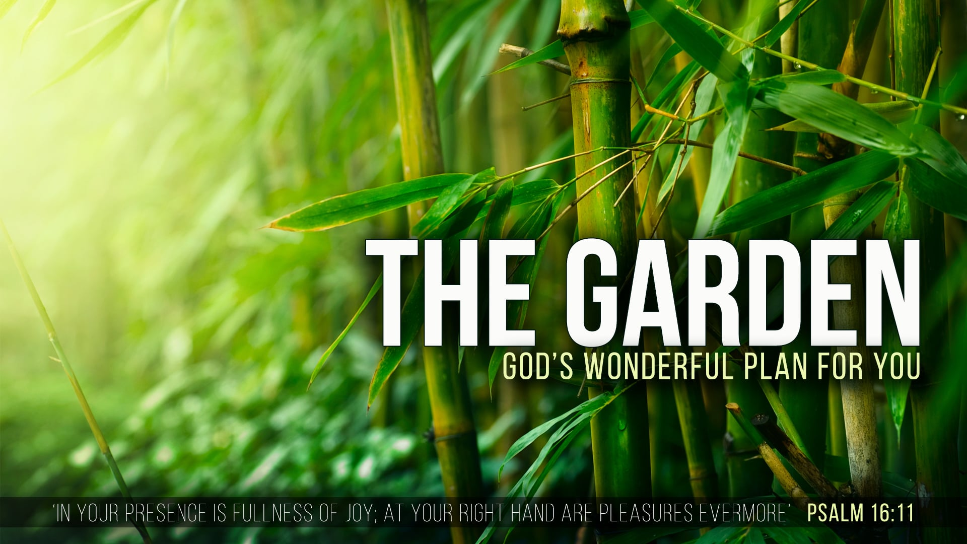 The Garden - Part 1