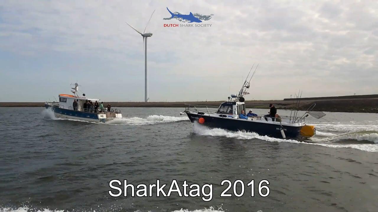 Sharkatag 2016