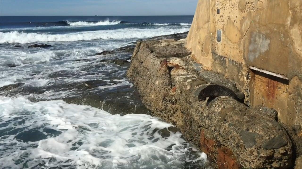 Baby Seal - Newy Baths