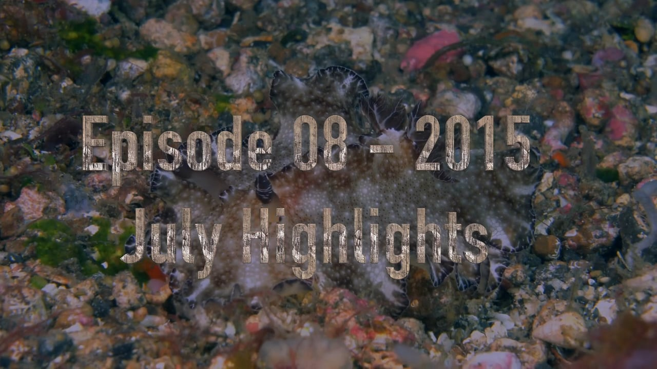 Critters of the Lembeh Strait   Episode 08 - 2016   July Highlights
