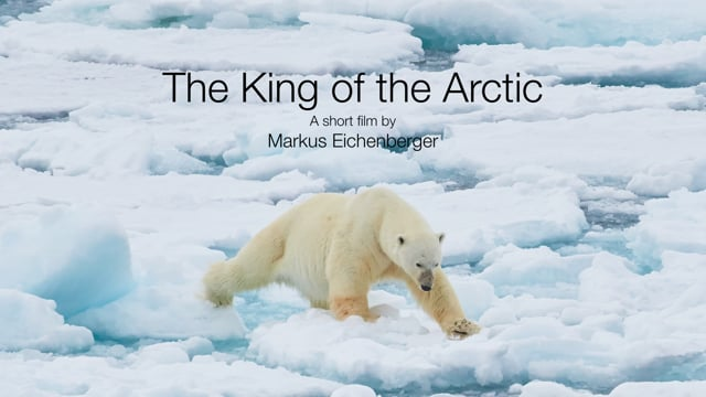 The King of the Arctic
